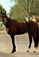 Cheval   / - Pferde