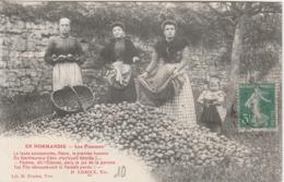 EN NORMANDIE ( Les Pommes) - France