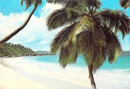Afrique- SEYCHELLES Petite  Anse  La Digue   (Photo Fayan 105 ) *PRIX FIXE - Seychelles