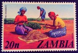 Zambie Zambia 1975 Agriculture Arachide Peanut Yvert 142 ** MNH - Zambia (1965-...)