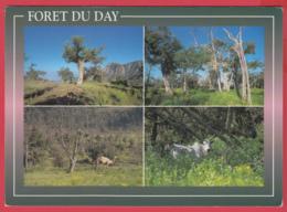 CP-DJIBOUTI- FORÊT Du DAY - Multivues ** 2 SCANS - Djibouti