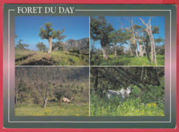 CP-DJIBOUTI- FORÊT Du DAY - Multivues ** 2 SCANS - Gibuti