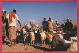CP-DJIBOUTI- Marché Aux Moutons - Animation ** 2 SCANS - Gibuti