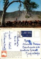 AN OUTBACK CATTLE SCENE,AUSTRALIA POSTCARD - Outback