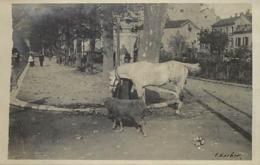 Themes Div-ref BB952- Carte Photo Non Située - Cheval Et Mouton - - Postkaarten