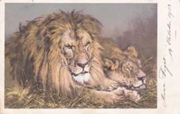 2511133Leeuw Met Leeuwin (poststempel 1903)(minuscule Vouwen In De Hoeken) - Lions