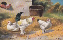 2511134Haan Met Kippen. (poststempel 1912)(zie Hoeken En Randen) - Animaux & Faune