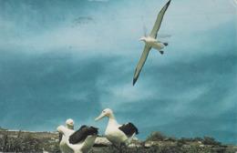 Neuseeland - Dunedin - Royal Albatrosses - Bird - Nice Stamp - Nieuw-Zeeland