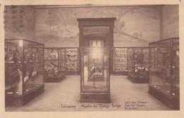 236852Tervueren, Musée Du Congo Belge Salle Des Oiseaux. - Tervuren
