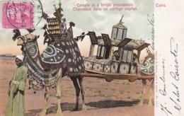 236882Cairo, Chameaux Dans Un Cortège Nuptial. - Cairo