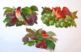3  CHROMOS DECOUPIS...OISEAUX COLORES SUR UNE BRANCHE PORTANT DES FRUITS..PRUNES..RAISINS..FRAMBOISES - Découpis