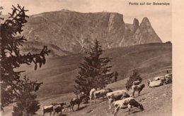 PARTIE AUF DER SEISERALPE-1912 - Bolzano (Bozen)