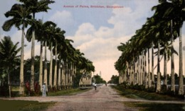 GEORGETOWN, Brickdam, Avenue Of Palms BRITISH GUIANA GUYANE BRITANNIQUE GUAYANA GUYANA - Postales
