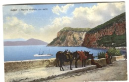 CAPRI Marina Grande Con Asini Colori Donkeys And Cruise Ship Sent 1921 - Italië