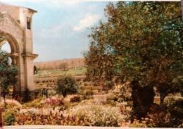 Old Vintage Beautiful Postcard GARDEN OF GETHSEMANE  WITH CITY WALL Jerusalem Gerusalemme Jordan 1960's / 70's - Giordania