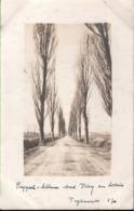 ! Vitry-en-Artois, Allee, 1917, Carte Photo Allemande, 1. Weltkrieg, Guerre 1914-18, Fotokarte - Vitry En Artois