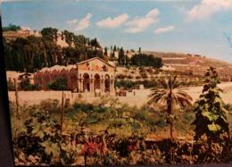 Old Vintage Beautiful Postcard CHURCH AND GARDEN OF GETHSEMANE Jerusalem Getsemani Jordan 1960's / 70's - Giordania