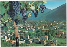 Bolzano - Bozen - Panorama  - (Grappoli D'uva Rossa / Red Grapes) - Bolzano (Bozen)