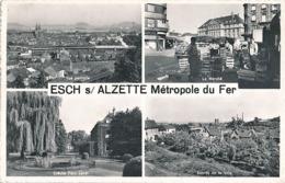 ESCH SUR ALZETTE - N° 1251 - METROPOLE DU FER - VUE MULTIPLES - Esch-Alzette
