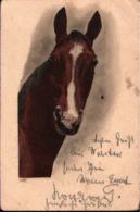 ! Alte Ansichtskarte, Pferd, Horse, Cheval, 1904, Dammkrug, Nachgebühr, Fehrbellin - Pferde