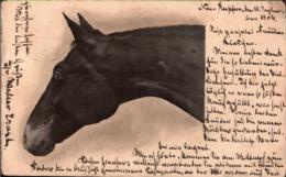 ! Alte Ansichtskarte, Pferd, Horse, Cheval, 1904 , Neuruppin, Fehrbellin - Horses