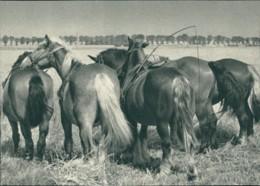 AK Aus Dem Kalender 1942 Die Treuen Helfer (32012) - Chevaux