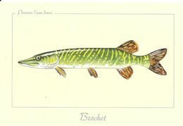 *     Poissons D'eau Douce : Brochet - Vissen & Schaaldieren