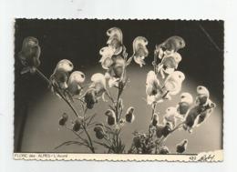 Flore Des Alpes L'aconit Roby 432 Bourg D'oisans - Bourg-d'Oisans