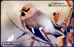 Used Phone Cards Russia Ekaterinburg -  Waxwing 100 ED. - Russland