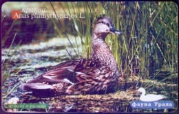 Used Phone Cards Russia Ekaterinburg -  Wild Duck 300 ED. - Russland