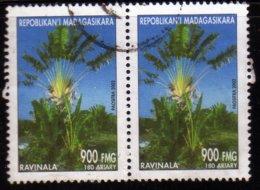 Madagascar 2002 Ravinala / Arbres / Plantes Tropicales / Tropical Plant N° 1835 Oblitéré Used Paire - Madagaskar (1960-...)