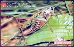 Used Phone Cards Russia Ekaterinburg - Grey Grasshopper 100 ED. - Russland