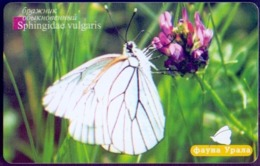 Used Phone Cards Russia Ekaterinburg - White Butterfly 60 ED. - Russland