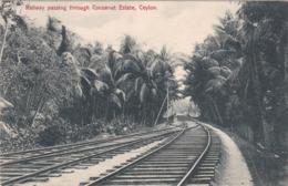CEYLAN - Sea Side Railway Passing Through COCOANUT Estate    (3J) - Sri Lanka (Ceylon)