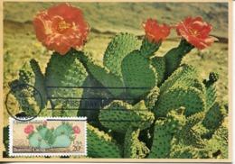 48996 U.s.a.  Maximum 1981, Beavertail Cactus, Opunha Basilaris - Sukkulenten