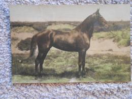 Cpa  Pferd / Horse / Cheval - Chevaux