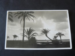 LIBIA _ BENGASI :  THE SUNSET IN THE PALM - GROVE OF  SABBRI...// BELLISSIMA CARTOLINA DI UN TRAMONTO - Libia
