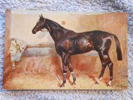 Cpa  Pferd / Horse / Cheval - Paarden