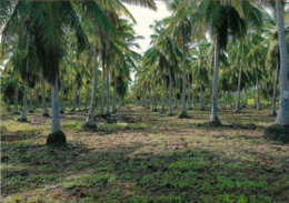 1 AK Marshall Islands * Bikini Atoll - Coconut-Palm-Test-Plantings - Ehem. Kernwaffentestgelände * Heute UNESCO Welterbe - Isole Marshall