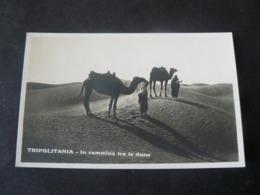 LIBYA : TRIPOLITANIA .... ON THE WAY ....///  CAMMIN FACENDO NEL DESERTO.... - Libia