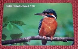 SWEDEN - Uccelli Canterini Ed Arboricoli