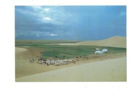 Cpm Asie > Mongolie - Ail In Gobi Mongolia Sheep Mouton - CHÈVRE Tente - Mongolia