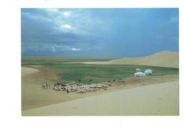 Cpm Asie > Mongolie - Ail In Gobi Mongolia Sheep Mouton - CHÈVRE Tente - Mongolie