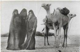 MAURITANIE. FEMMES MAURES CORVEE DE BOIS - Mauritania