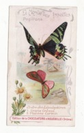 Chromo  CHOCOLAT AIGUEBELLE   Le Monde Des Insectes    Papillons - Aiguebelle