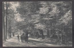 104061/ TERVUREN, Le Parc, Attelage Sortant D'un Sous Bois - Tervuren
