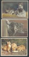 +++ Lot 3 CPA - Carte Fantaisie - Chat - Cat - Katze   // - Gatti