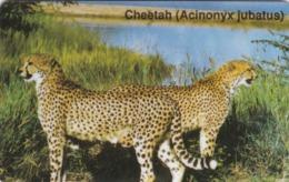 Namibia, NMB-009,  Cheetah - Acinonyx Jubatus, 2 Scans.  Please Read ! - Namibia