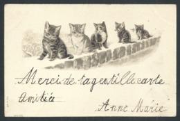 +++ CPA - Carte Fantaisie - Chat - Cat - Katze - Relief Gaufrée Embossed   // - Gatti