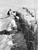 Photo Algérie. Barrage Contre Le Sable El Oued 1980. Photo Du Père G. Beeckmans - Afrique